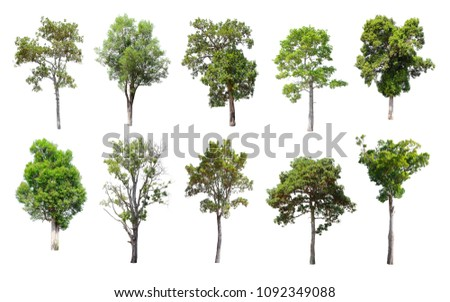 Collection of Isolated Trees on white background. A beautiful trees from Thailand. Suitable for use in architectural design or Decoration work. Used with natural articles both on print and website. #1092349088