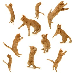 collection of kittens in action. On white background. 3500 x 3500 pixels.