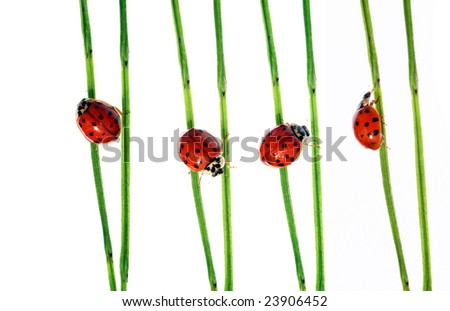 collection of lady bugs on flora against white background
