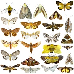 Collection of  night butterflies isolated on white, moth, atlas ,Set of realistic colorful tropical butterflies and insect, zoology, entomology