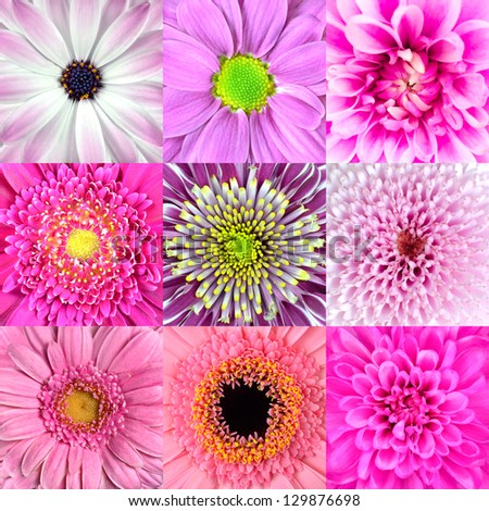 Collection of Nine Various Pink Flower Macros including Rose, Daisy, Osteospermum, Chrysanthemum, Marigold and other Wild Flowers