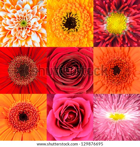 Collection of Nine Various Red Flower Macros including Rose, Daisy, Osteospermum, Chrysanthemum, Marigold and other Wild Flowers