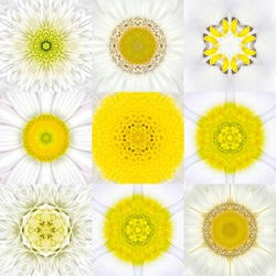 Collection of Nine White Concentric Flower Mandalas. Kaleidoscope Concentric design. Full Flower Background