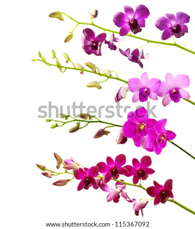 Collection of orchid flower on white background.