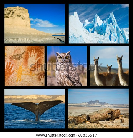 Collection of Patagonia images, showing wildlife and landscapes, petrified woods, cave paintings.