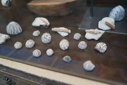 Collection of petrified sea urchins flints displayed in shop window at baltic sea