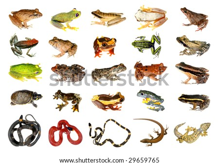 Collection of reptiles and amphibians from the Amazon rainforest