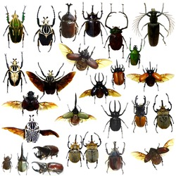 collection of  rhinoceros beetle,Set of realistic colorful tropical butterflies and insect, zoology, entomology, biology