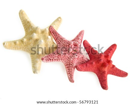 collection of sea star starfish close up macro detail isolated on white background
