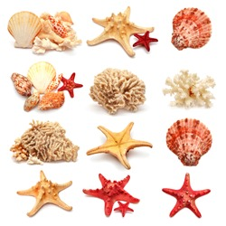 Collection of sea stars, shells and coral isolated on white background
