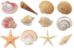 Collection of seashells and starfish  isolated on white background
