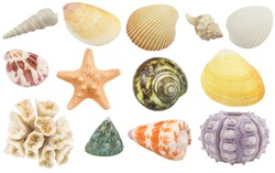 Collection of seashells, coral and starfish  isolated on white background