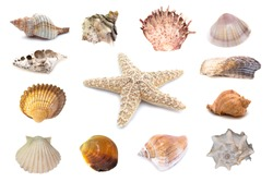 Collection of seashells isolated on white background. Full size.