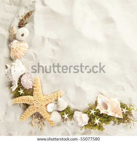Collection of seashells on a sandy beach with copy space