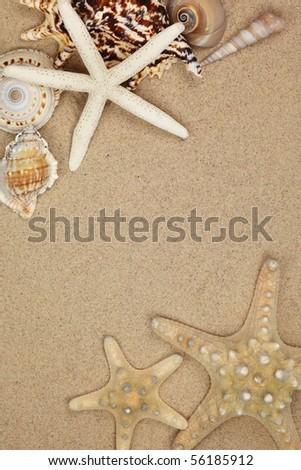 Collection of seashells on sand beach