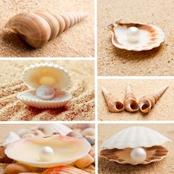 collection of seashells. pearl on the seashell . The exotic sea shell . treasure from the sea.