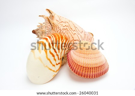 Collection of 3 seashells - top view - isolated on white - stock photo