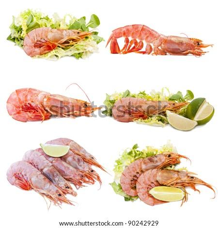 collection of shellfish