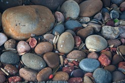COLLECTION OF SMALL AND LARGE ROUND SMOOTH PEBBLES IN EARTHY COLOURS WITH FALLEN LEAVES IN BETWEEN