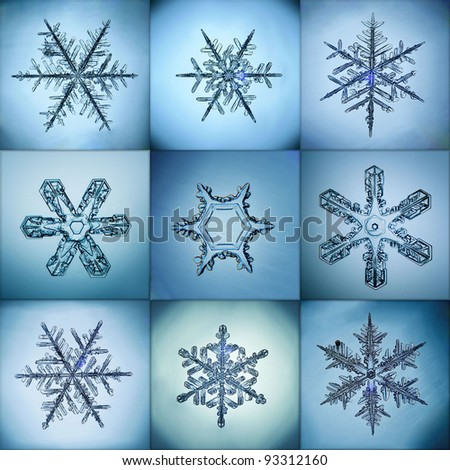 Collection of snowflakes natural  macro
