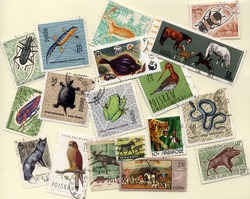 Collection of stamps with different animals