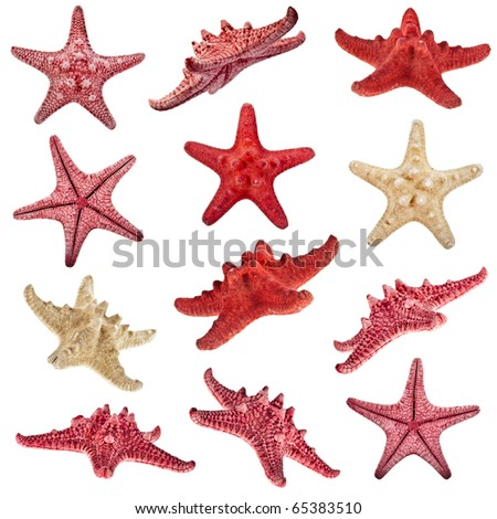 collection of starfish family close up macro detail isolated