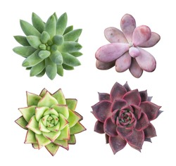 collection of succulent top isolated on white background