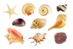 Collection of ten different seashells, isolated on white background.