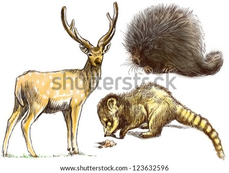 Collection of three animals - Deer, Coati and Porcupine. / Hand drawing isolated on white.