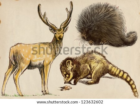 Collection of three animals - Deer, Coati and Porcupine. / Hand drawing on old brown paper.