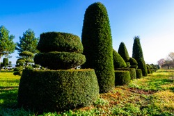 Collection of topiary evergreen conifer trees differently pruned and planted in a row in tree nursery or botanical garden. Crowns of conifer trees trimmed in different shapes for garden exterior.