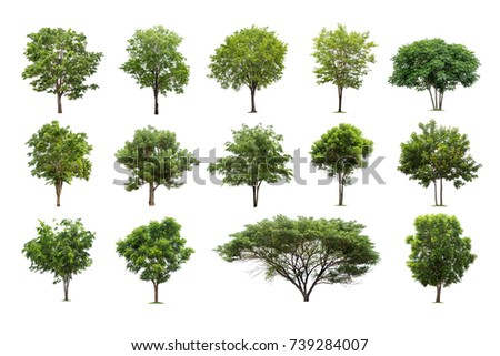 Collection of trees isolated on white background high resolution for graphic decoration, suitable for both web and print media #739284007