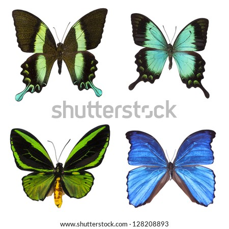 collection of tropical butterflies isolated on white