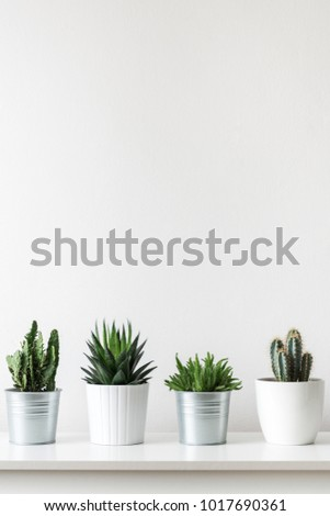 Collection of various cactus and succulent plants in different pots. Potted cactus house plants on white shelf against white wall. - Shutterstock ID 1017690361