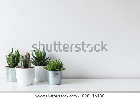 Collection of various cactus and succulent plants in different pots. Potted cactus house plants on white shelf against white wall. #1028116180
