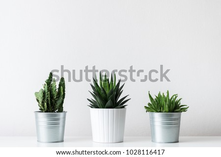 Collection of various cactus and succulent plants in different pots. Potted cactus house plants on white shelf against white wall. - Shutterstock ID 1028116417