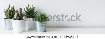 Collection of various cactus and succulent plants in different pots. Potted cactus house plants on white shelf against white wall. #1043935345