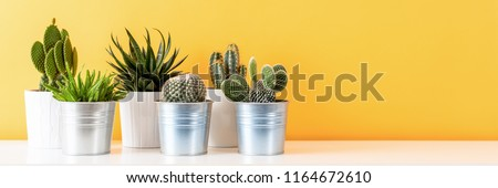 Collection of various cactus plants in different pots. Potted cactus house plants on white shelf against pastel mustard colored wall. Cactus plants banner.