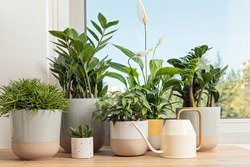 Collection of various home plants. Home gardening, greenery, interior design with plants, hobby concept