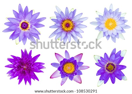 Collection of violet and purple water lily isolated on white