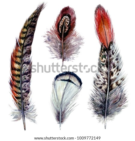 Shutterstock Collection of Watercolor Pheasant Feathers. Wild Nature Bird Plumage. Boho Decoration Elements Isolated on White. Vintage Design. Illustration in Realistic Style.