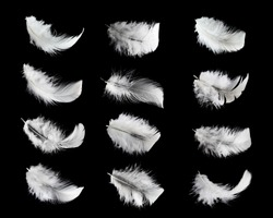 Collection of white feathers isolated on black background
