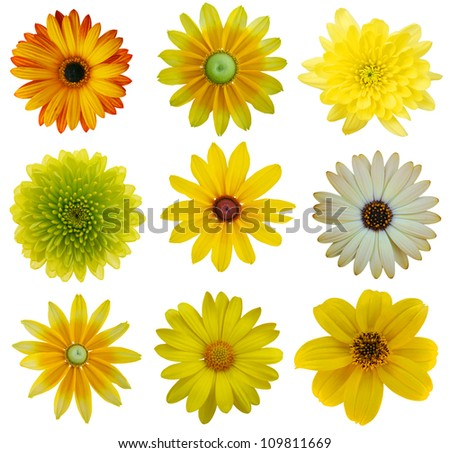 Free photos white chrysanthemum flowers with green center avopix collection of yellow flowers isolated on white various set of dahlia dandelion daisy mightylinksfo