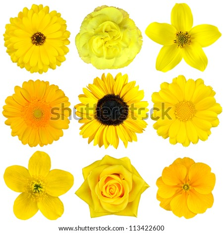 Collection of Yellow Flowers Isolated on White. Various set of Dahlia, Dandelion, Daisy, Gerber, Sunflower, Marigold Flowers #113422600