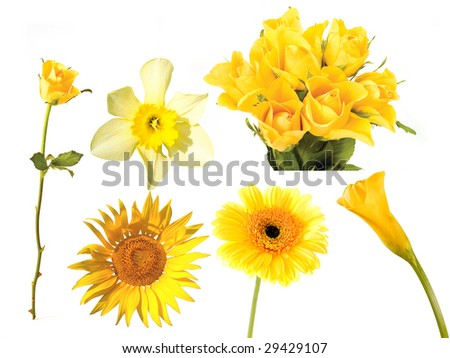 collection of yellow flowers on the white background