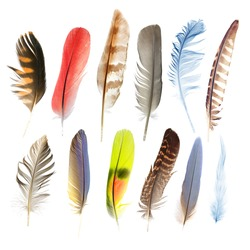 collection pen feathers of birds, isolated on white background