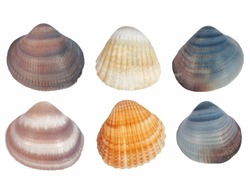 Collection Sea shells isolated on white background, texture