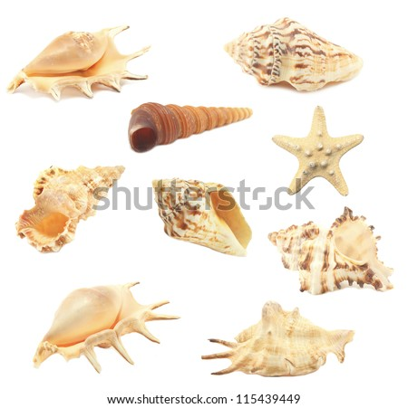 collection seashell isolated on white background