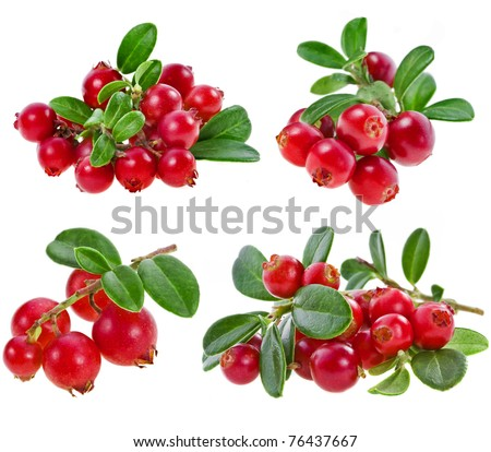 collection set fresh cranberries isolated on white background
