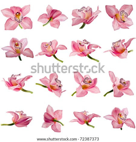 Collection set of beautiful pink Orchid flower on white background